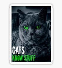Cats Know Stuff  Sticker