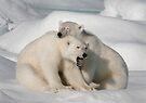 Polar Brothers by Steve Bulford