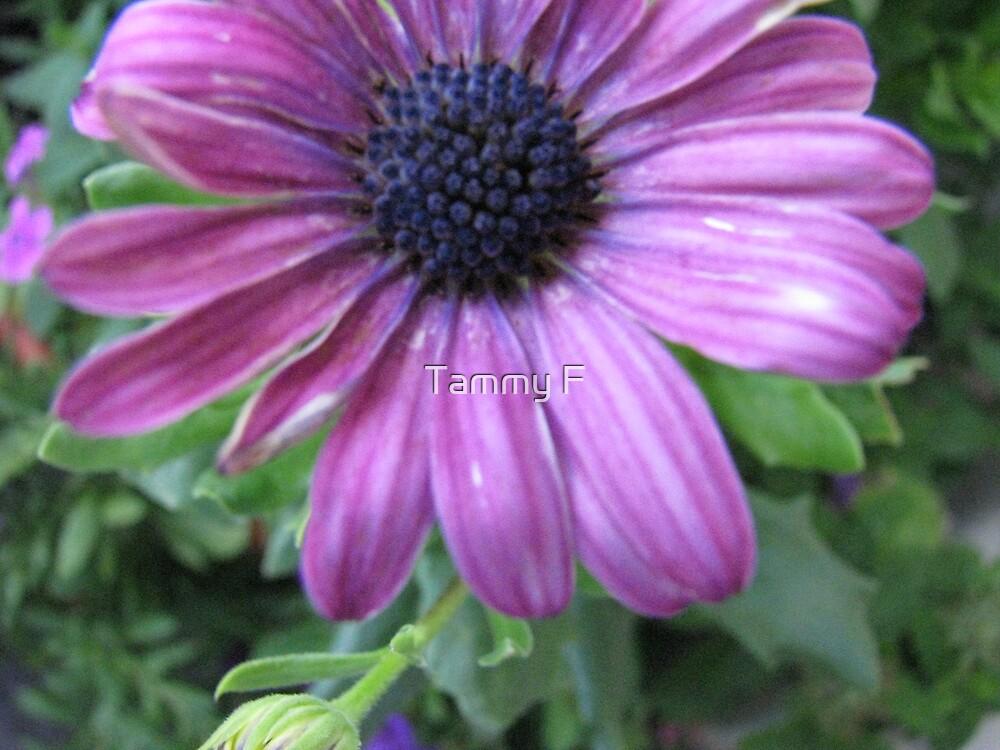 Purple Fancy! by Tammy F