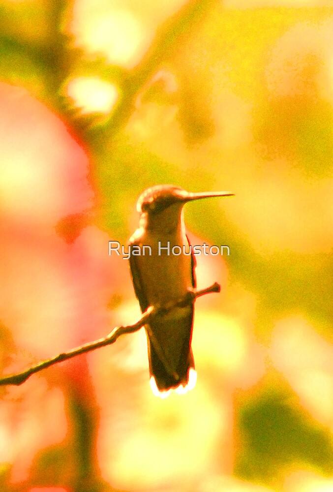 Hummingbird Pastels by Ryan Houston