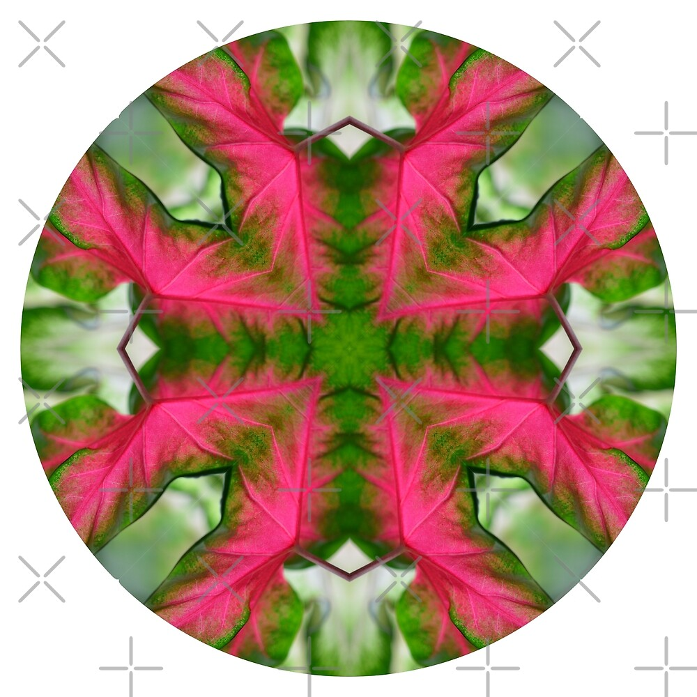 Circle 3: Leaves of Pink and Green by macrodesign