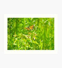 Flight of the Monarch Art Print