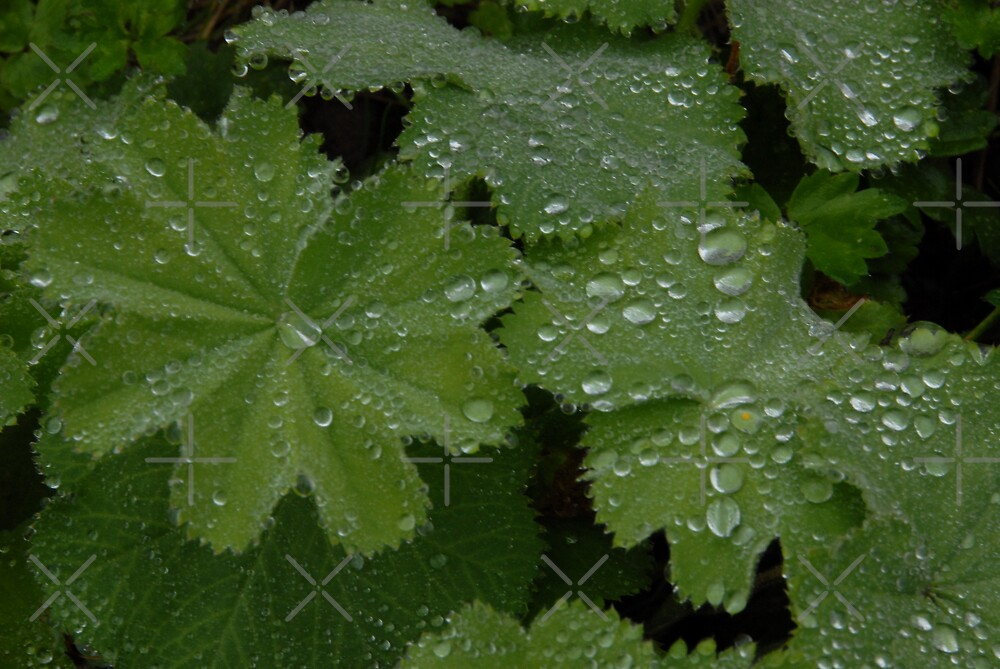 After the rain - droplets by JamesTH