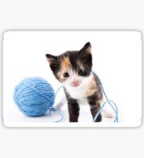 Cute Calypso Kitten and Blue Yarn  Sticker
