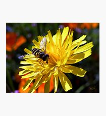Flower with Wasp Photographic Print