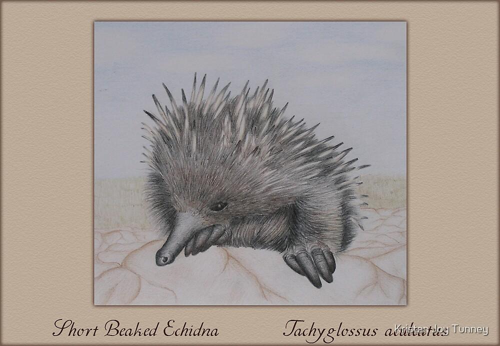 Short Beaked Echidna by Kristen Joy Tunney