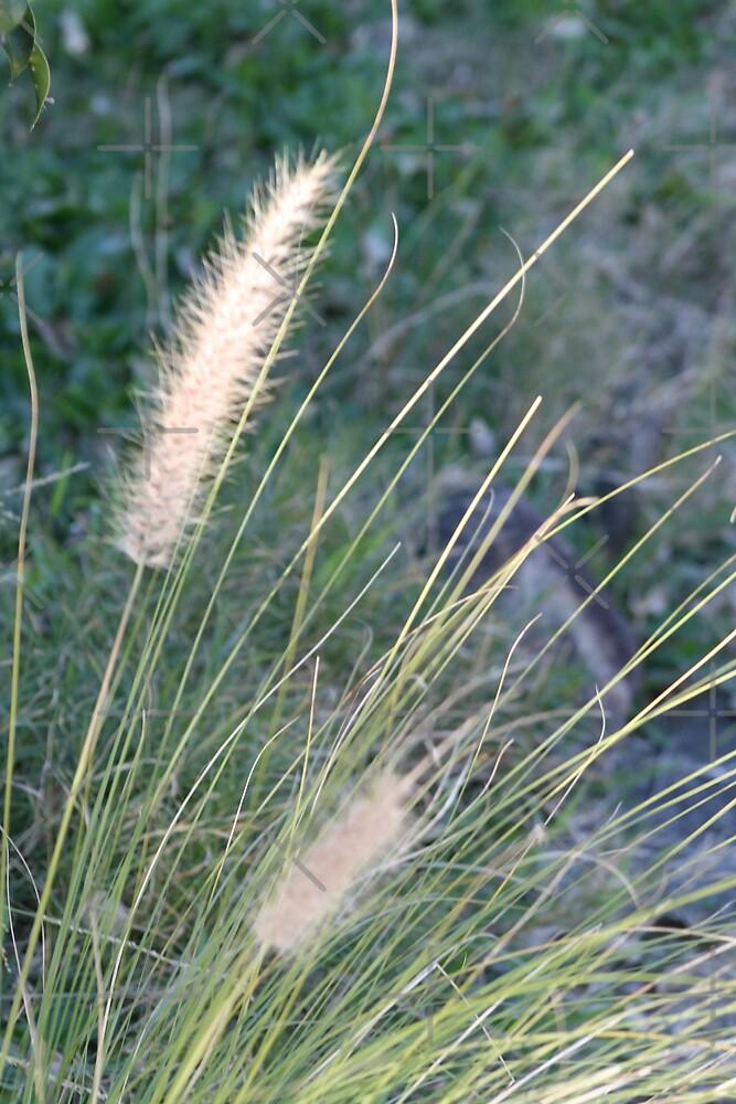 Grass 2008 by sunism