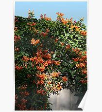 Orange Flowers on Vine 2008 Poster