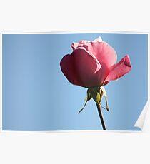 Pink Rose 2008 Poster