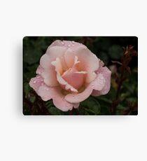 Rose and Rain - Soft Pink Raindrops Canvas Print