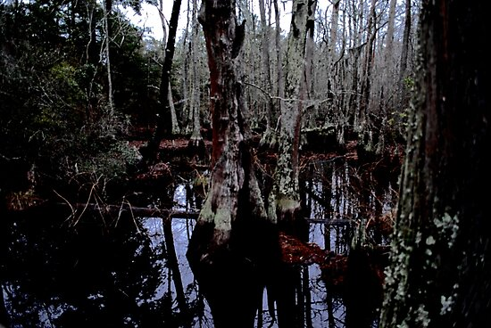 Bald Cypress by Katherine Harris