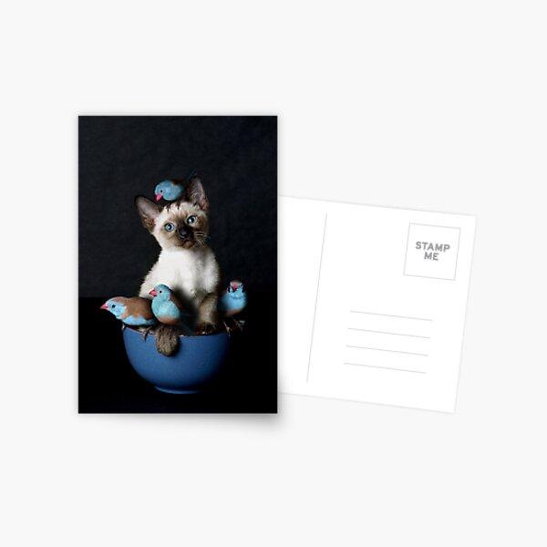 Bird Puss Postcard