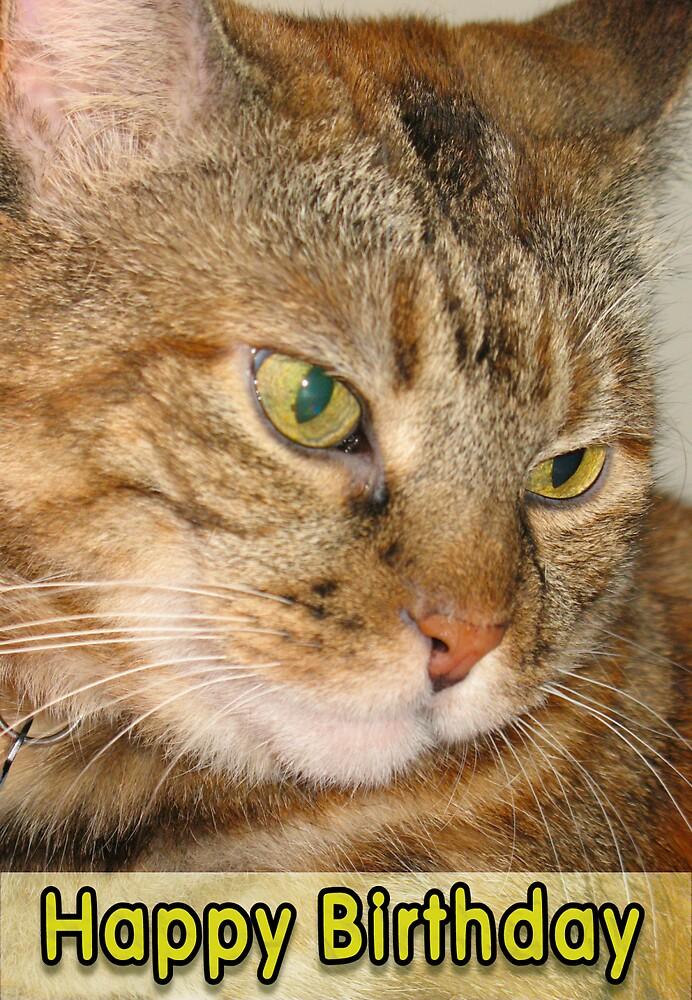 Cat Happy Birthday by donnagrayson