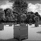 Jardin des Tuileries by Heather Davies