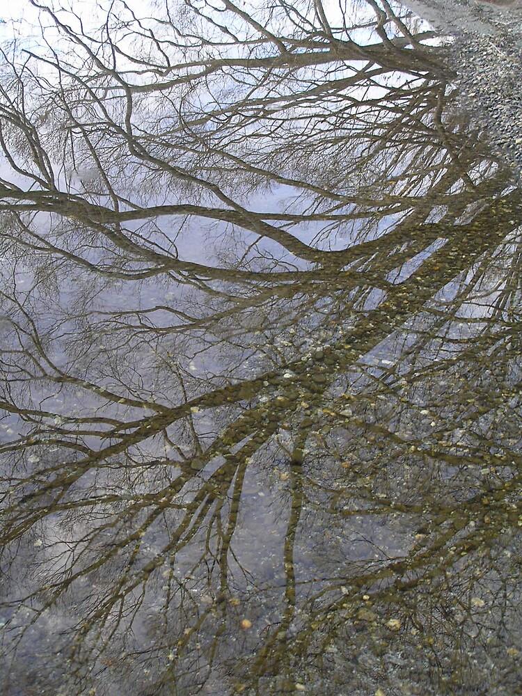 Reflection by Rebecca Preston