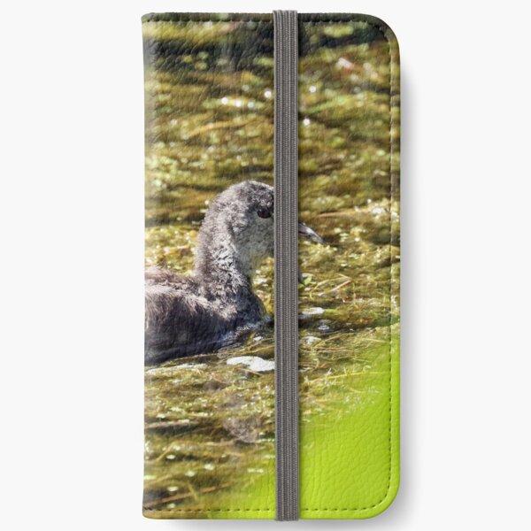 Dusky Moorhen - immature (508) iPhone Wallet