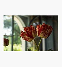 Of Tulips and Garden Windows Photographic Print