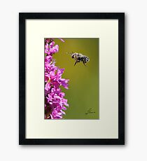 Air Walk Framed Print