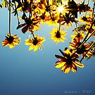 here comes the sun by Aimelle