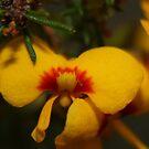 Macro Yellow Flower by Cameron O'Neill