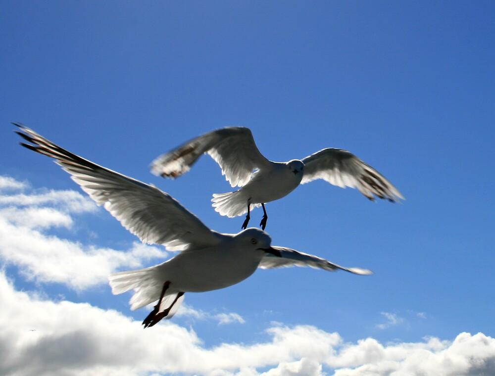 Lake Wakatipu Sea Gulls by DRWilliams