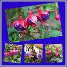 Tanzen Fuchsia Belles - Sommer-Blumen-Collage von BlueMoonRose