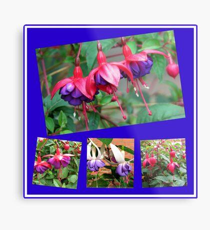Tanzen Fuchsia Belles - Sommer-Blumen-Collage Metallbild