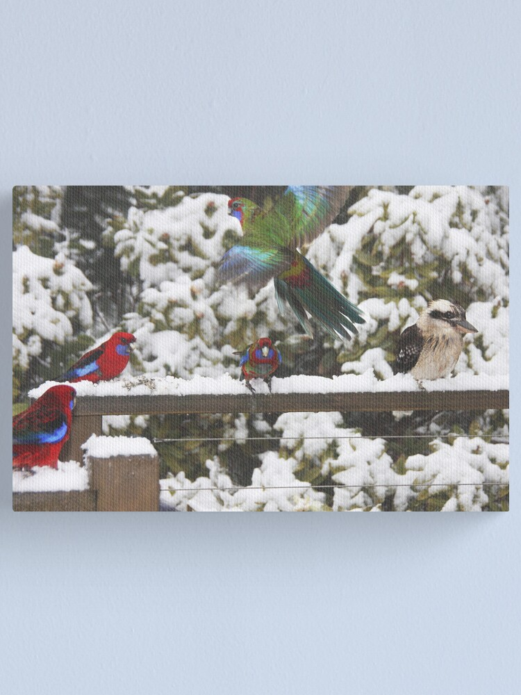 Alternate view of Parrots in the snow Canvas Print