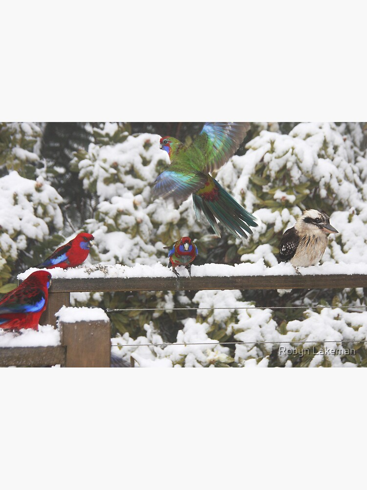Parrots in the snow by Rivergirl