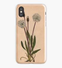 Slender Agoseris-Available As Art Prints-Mugs,Cases,Duvets,T Shirts,Stickers,etc iPhone Case