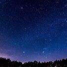 Stars, Forest, Night by Neli Dimitrova
