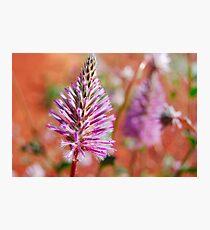NW wildflower Photographic Print