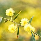 Delights of an Aussie Spring by Linda Lees