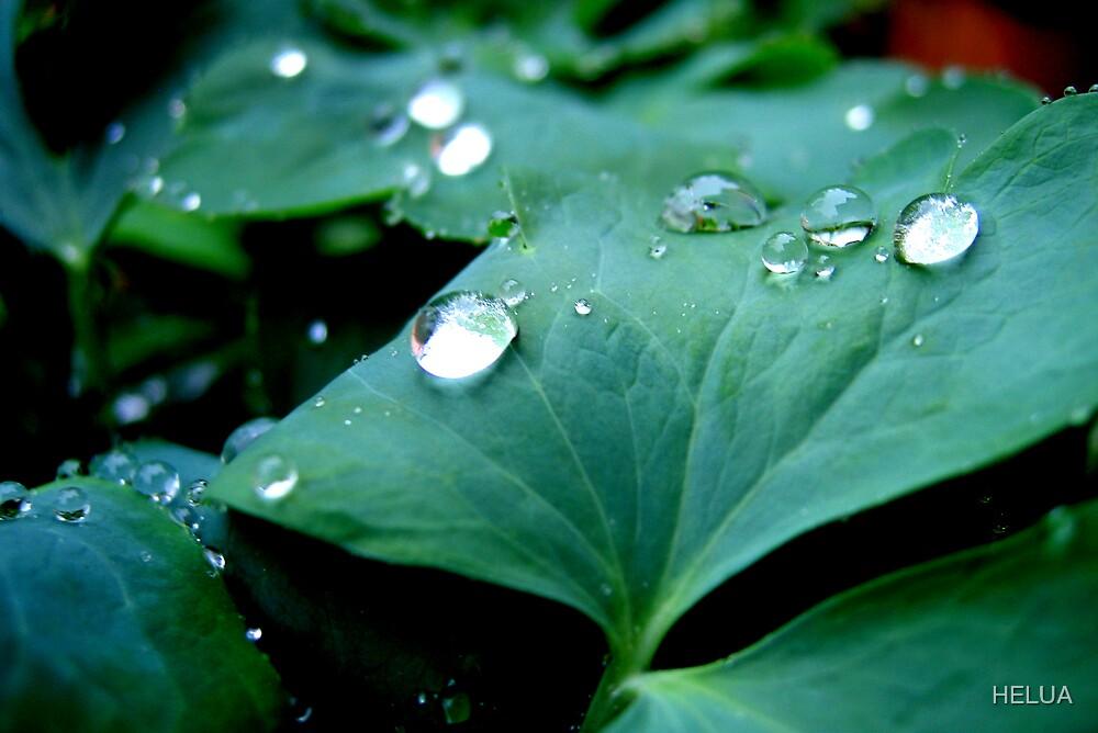 Rain Drops Keep Falling by HELUA