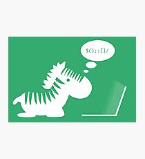 Programming zebra Photographic Print