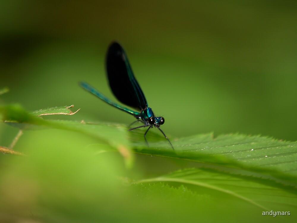 Dragonfly Woodstock NY by andymars