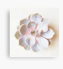 Pink Succulent II Canvas Print