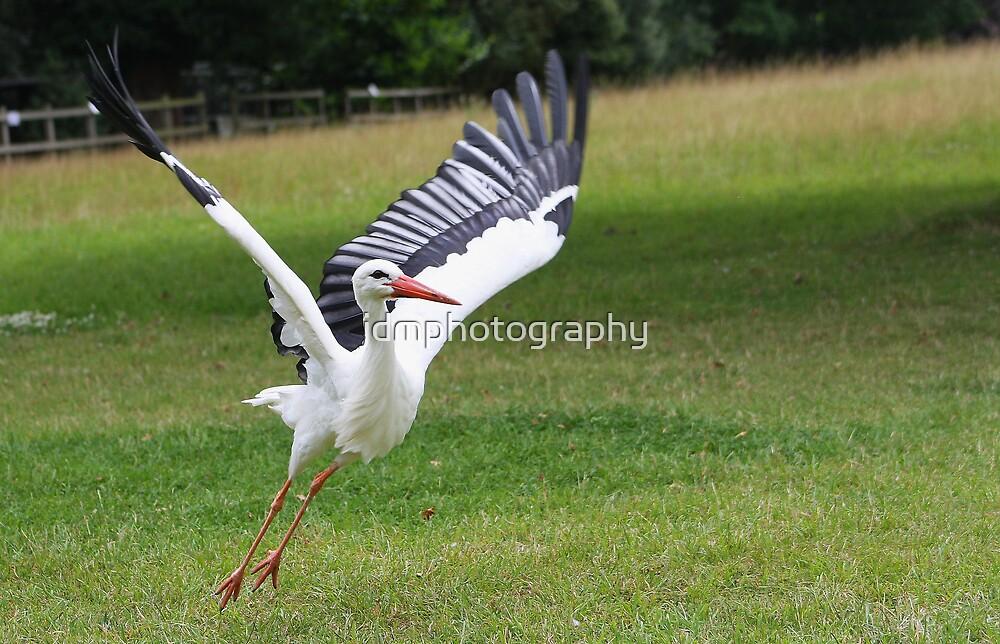 White Stork by jdmphotography