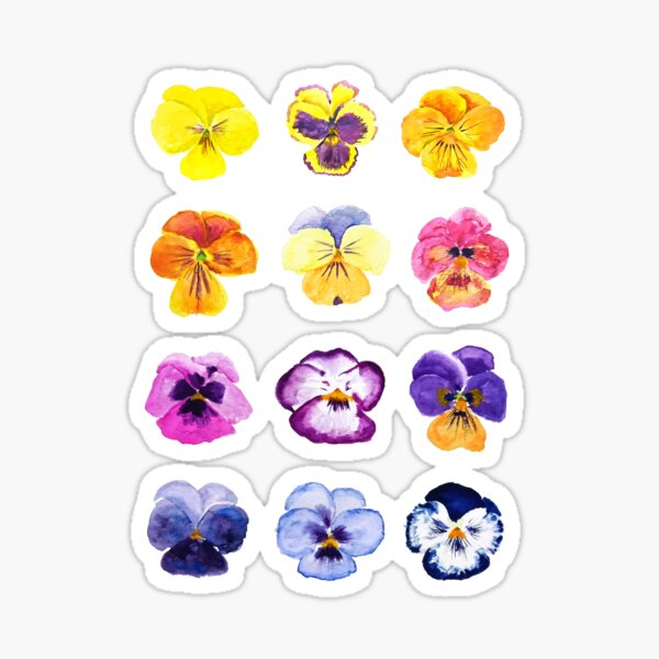 Colorful pansies collection watercolor painting  Sticker