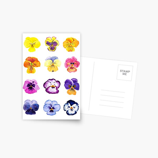 Colorful pansies collection watercolor painting  Postcard