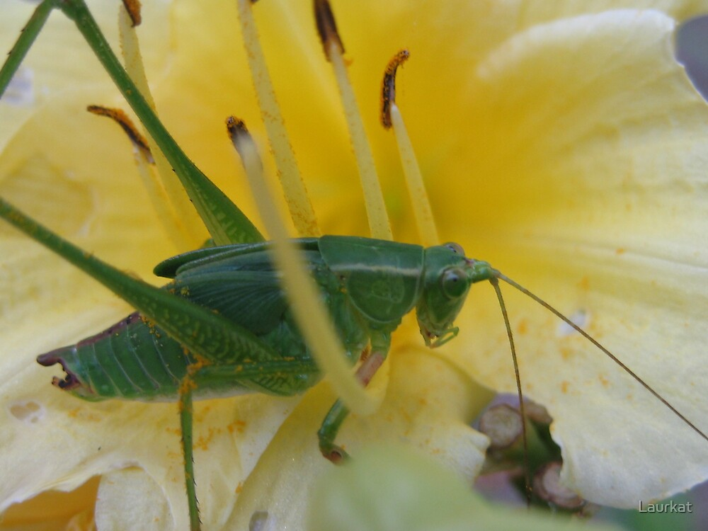 Sautee Valley grasshopper and blossom by Laurkat
