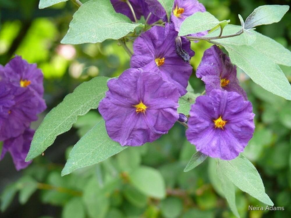 purple bliss by Neira Adams