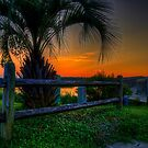 Palm Tree to the Boardwalk by TJ Baccari Photography