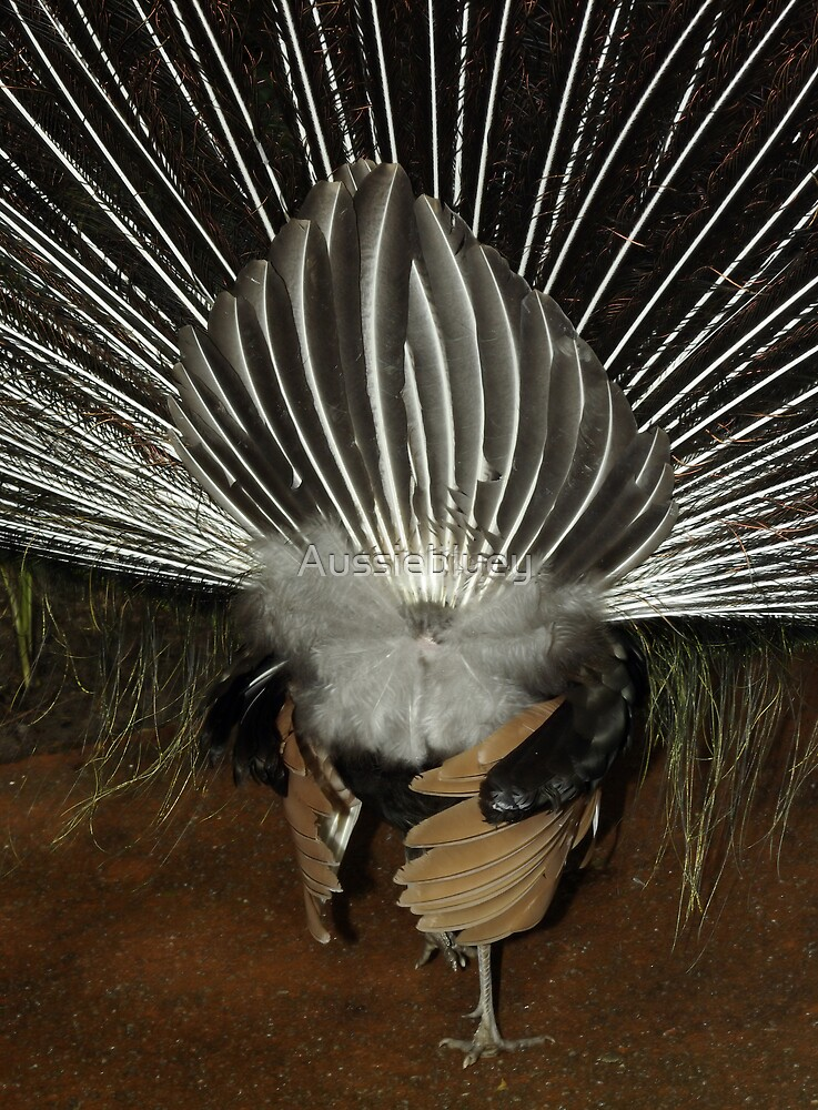 Lyrebird form another angle. by Aussiebluey