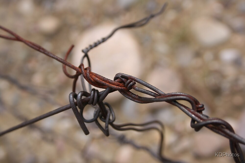 Barbwire by KDPhotos