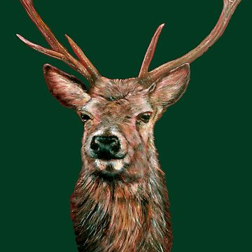 Highland Red Deer Stag by sharpie