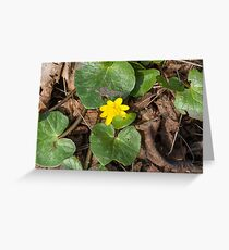 yellow primroses Greeting Card