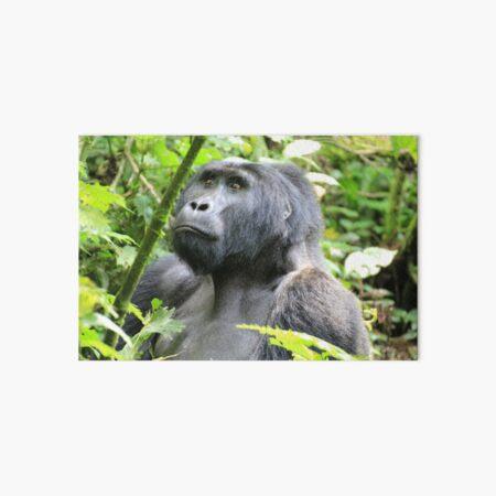 Uganda Bwindi National Park Gorilla Dschungel Jungle Wald Forest Bush Galeriedruck