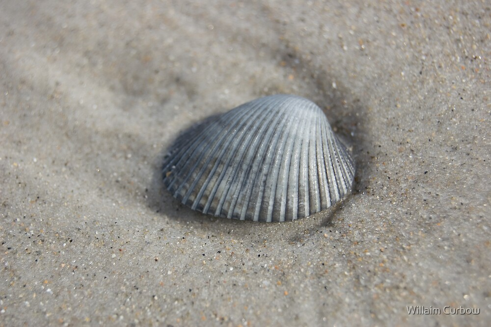 Shell by Willaim Curbow