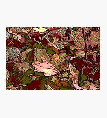 leaf background Photographic Print